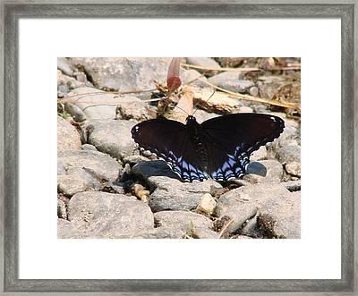 Sunbathing Blue Framed Print by Kristina Mitchell