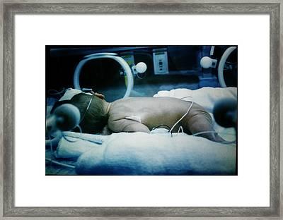 Sunbathing Preemie Framed Print