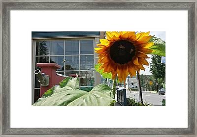 Sunbeam Fei Sunflower Framed Print by Mark Victors
