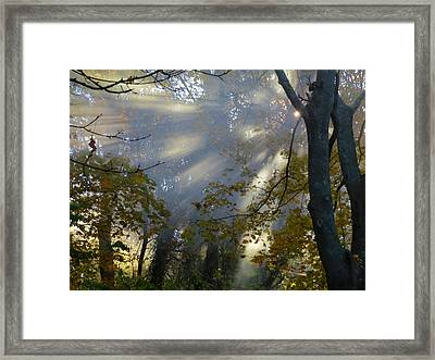 Framed Print featuring the photograph Sunbeam Morning by Dianne Cowen
