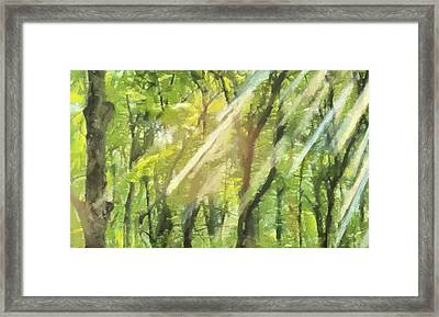 Sunbeams In The Forest Framed Print by Dan Sproul