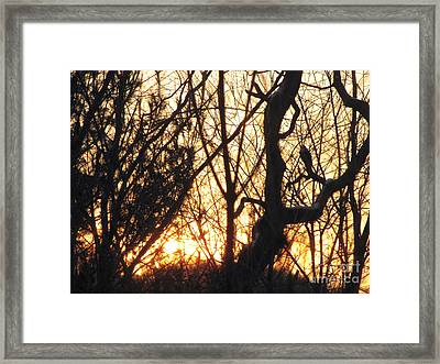 Framed Print featuring the photograph Sunblaze-3  by Melissa Stoudt