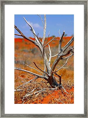 Sunbleached Framed Print
