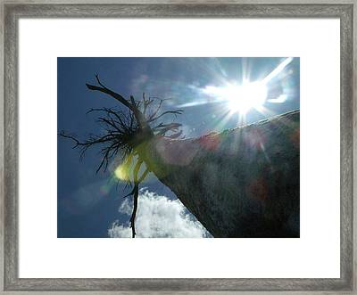 Sunburnt Quetico Framed Print by Amy Manley