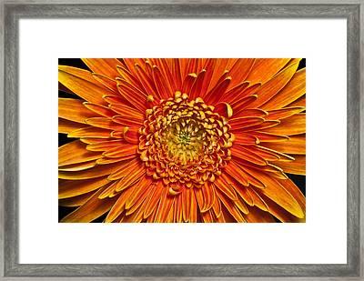 Sunburst Framed Print by Art Barker