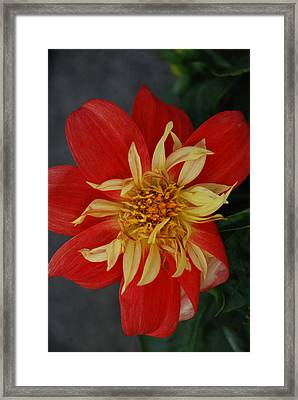 Sunburst Framed Print by Carol  Eliassen