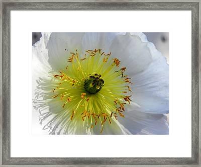 Framed Print featuring the photograph Sunburst by Deb Halloran