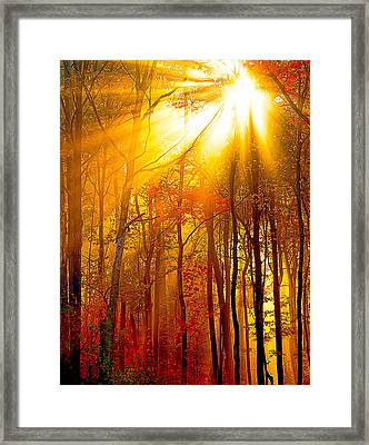 Sunburst In The Forest Framed Print by Randall Branham