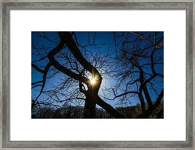 Sunburst In The Orchard Framed Print