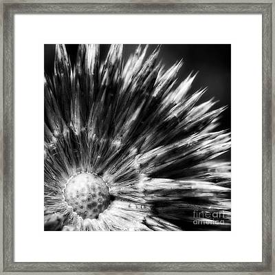 Framed Print featuring the photograph Sunburst by Inge Riis McDonald
