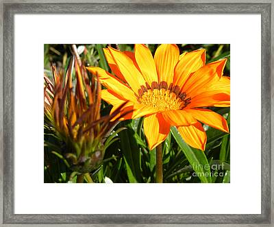Sunburst Framed Print by Laura Yamada