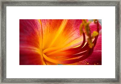 Sunburst Ll Framed Print