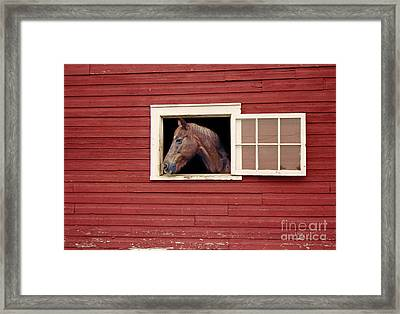 Framed Print featuring the photograph Sundance by Tom Brickhouse