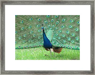 Sunday Best Framed Print by Loretta Pokorny