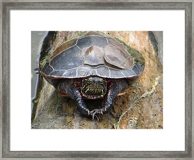 Sunday Morning In The Turtle Pond Framed Print by Rita Mueller