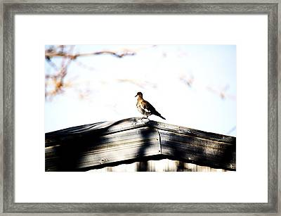 Framed Print featuring the photograph Sunday Morning  by Jessica Shelton