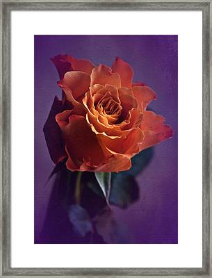 Sunday Rose  Framed Print