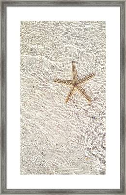 Framed Print featuring the photograph Anna Maria Island Starfish by Jean Marie Maggi