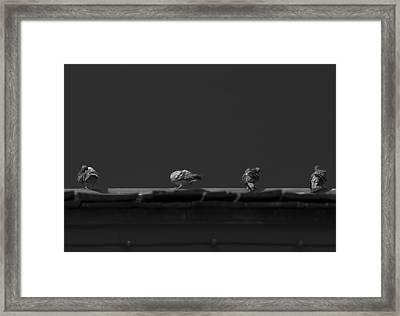 Sunday's Bath Framed Print