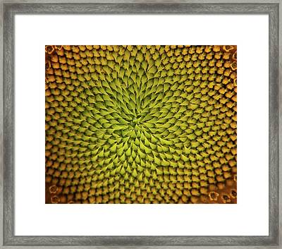 Sunflower Sundial Framed Print
