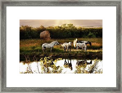 Framed Print featuring the photograph Sundown by Elaine Manley