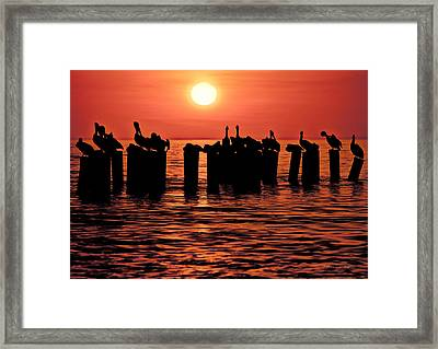 Framed Print featuring the photograph Sundown With Pelicans by Julis Simo