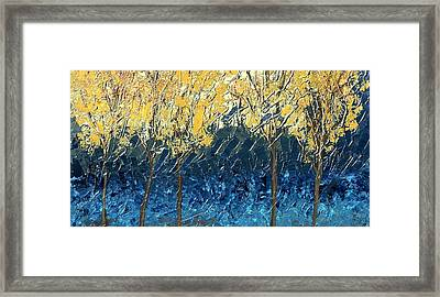 Sundrenched Trees Framed Print