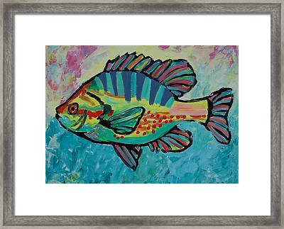 Sunfish Framed Print by Krista Ouellette