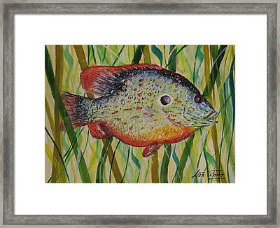 Sunfish Framed Print by Stan Tenney