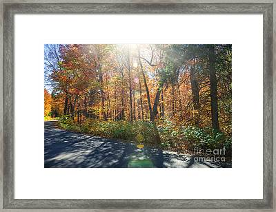 Sunflare In Fall Forest Framed Print
