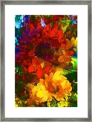 Sunflower 11 Framed Print by Pamela Cooper