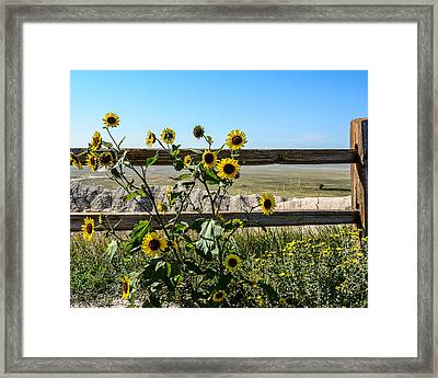 Sunflower 2 Framed Print by Robin Williams
