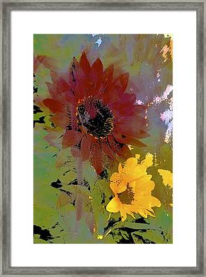 Sunflower 33 Framed Print by Pamela Cooper