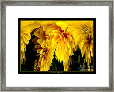 Sunflower Abstract 1 Framed Print by Rose Santuci-Sofranko