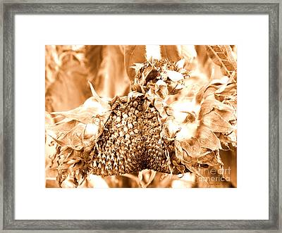 Sunflower - After Summer Has Gone Framed Print