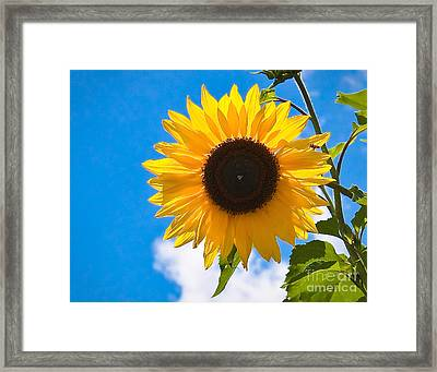 Sunflower And Bee At Work Framed Print