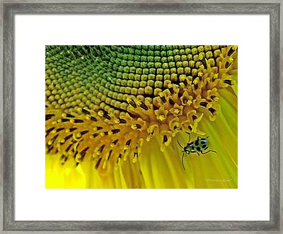 Sunflower And Beetle Framed Print
