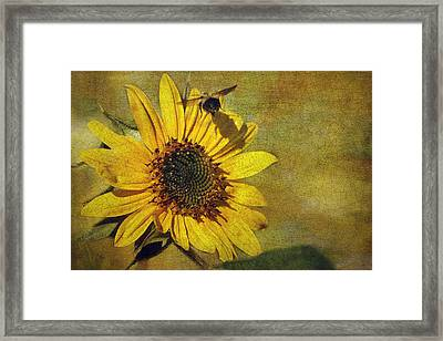 Sunflower And Bumble Bee Framed Print