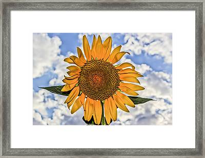 00008 Sunflower And Clouds Framed Print by Photographic Art by Russel Ray Photos
