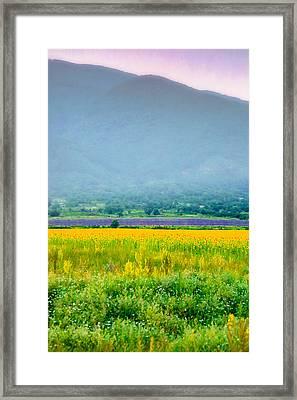 Sunflower And Lavender Fields In Mist Framed Print by Eti Reid