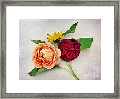 Sunflower And Roses Watercolour Framed Print by John Edwards