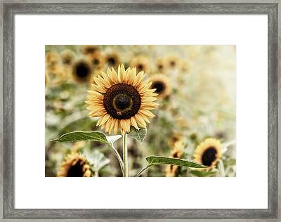 Sunflower And The Bee Framed Print by June Jacobsen