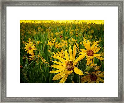 Sunflower Army Framed Print by Laurie Purcell