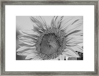 Sunflower Black And White Framed Print