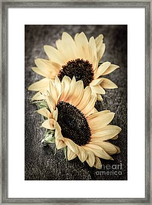 Sunflower Blossoms Framed Print by Elena Elisseeva