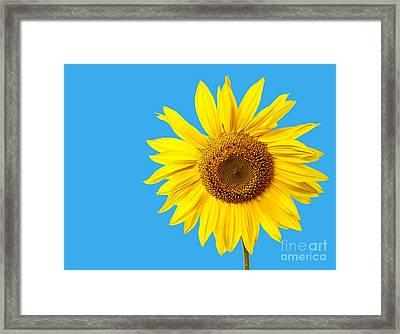 Sunflower Blue Sky Framed Print by Edward Fielding
