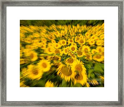 Framed Print featuring the photograph Sunflower Blur by Dale Nelson