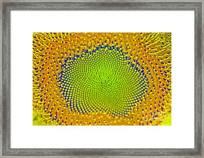 Sunflower Center Framed Print by Iris Richardson