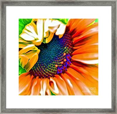 Sunflower Crazed Framed Print by Gwyn Newcombe