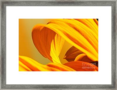 Sunflower Curve Framed Print by Michael Cinnamond